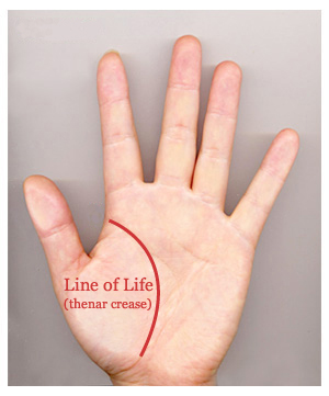 PALM READING - Life Line: Line of life in Palm Reading