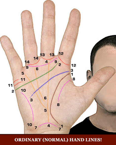 Palm reading lines: 14 ordinary (normal) hand lines.