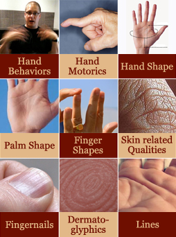 Palm reading guide 9 hand levels.