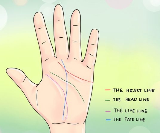 Palm reading lines: the heart line, head line, life line & fate line!
